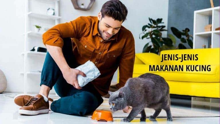 Makanan Kucing Persia dan Kucing Kampung agar Tumbuh Sehat